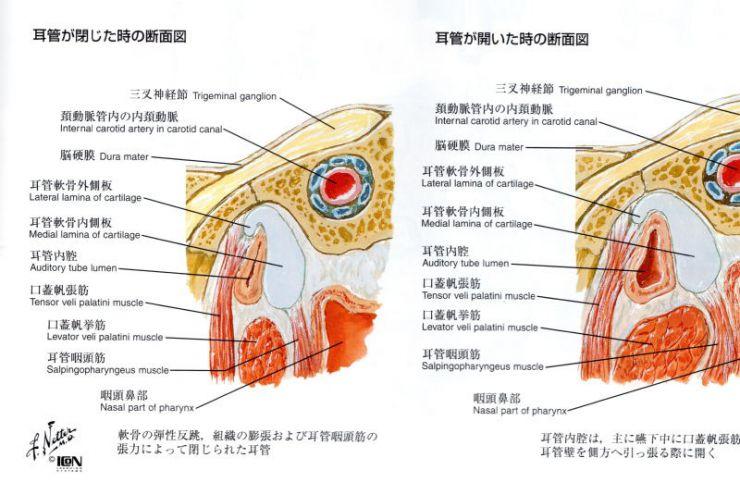 山口県山口市の整骨院 新しい整骨院 顎関節症・耳鳴り